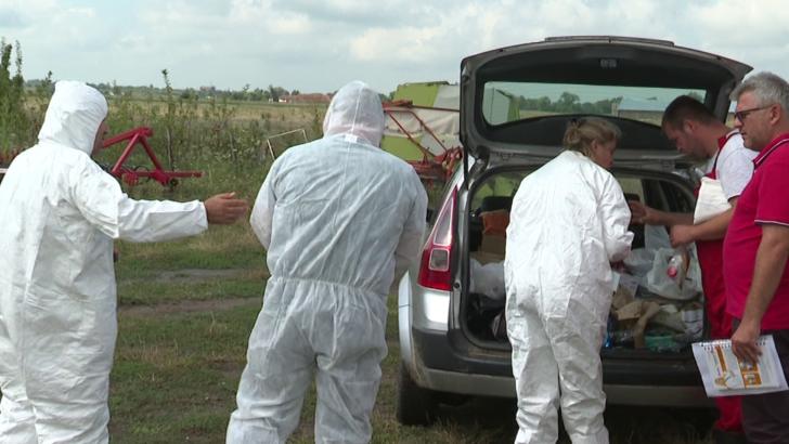 Măsuri speciale pentru prevenirea gripei aviare în Arad. Ce trebuie să facă propretarii de păsări