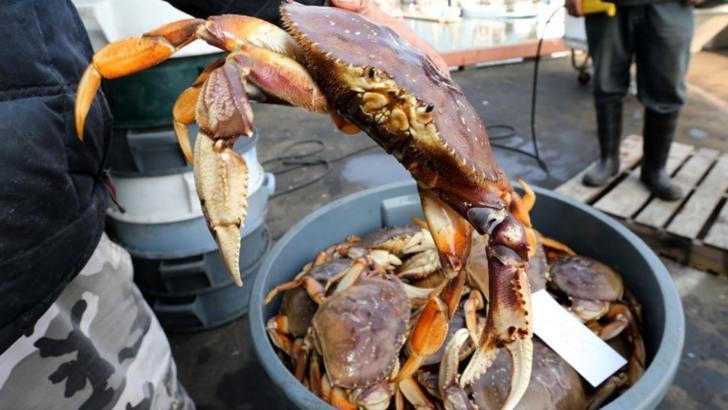 Oceanul Pacific este atât de acid încât dizolvă crabii de vii