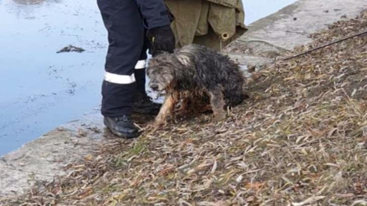 Operatiune de salvare dramatica la Cluj, dupa ce un caine a cazut in raul Somes