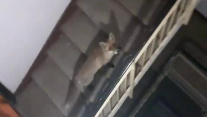 FOTO Un musafir nepoftit a adormit pe scările blocului. Reacția locatarilor
