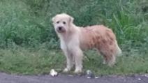 Un câine pierdut și-a așteptat stăpânii să se întoarcă, în același loc, 4 ani. La regăsire, a șocat!