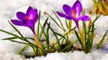 Horoscopul primăverii 2020: ce le așteaptă pe zodii în anotimpul trezirii