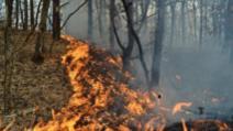 Incendiu de vegetație, la Brazi. Traficul feroviar, blocat între Ploiești și București