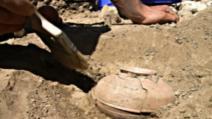 Au dezgropat o oală veche de 800 de ani, plină cu seminţe. Când au văzut ce a răsărit, au îngheţat!