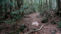 Cea mai terifiantă pădure din lume ascunde un secret oribil! Poliţia, în alertă! Ce au găsit acolo