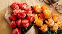 Cum poți face ca trandafirii din buchete să prindă rădăcini în ghivece