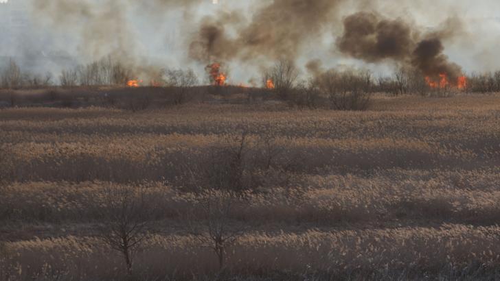 Un alt incendiu a izbucnit în DELTA VĂCĂREȘTI! Se solicită sprijinul Poliţiei Capitalei