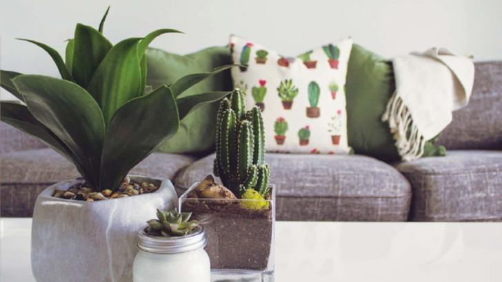 De ce trebuie să așezi cactusul întotdeauna lângă televizor? Îți va schimba viața