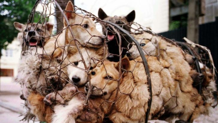 China pregătește o măsură fără precedent: se interzice consumul cărnii de câine, șarpe, broaște sau țestoase