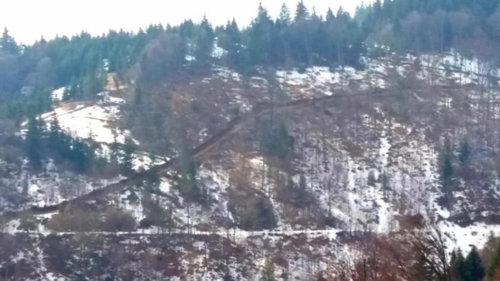 DEZVĂLUIRI ȘOCANTE: parlamentari, primari, polițiști și pădurari, implicați în defrisările pădurilor din Alba