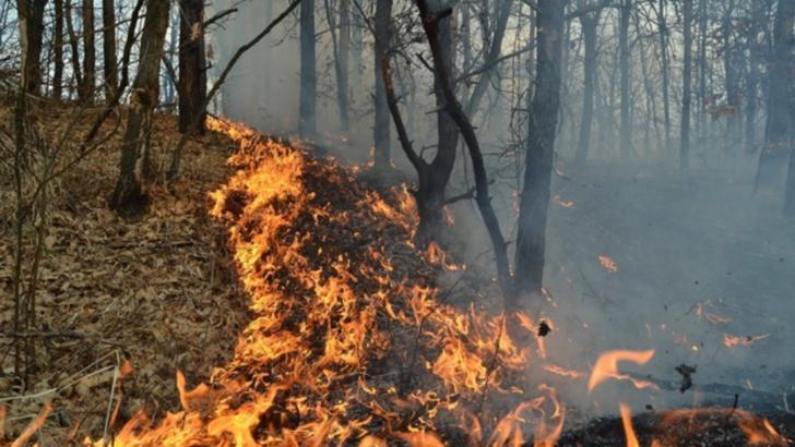 incendiu padure arges