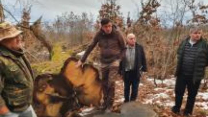 Un pensionar militar a reuşit să pună stop jafului dintr-o pădure din Olt. Ani de-a rândul, arbori seculari au fost tăiaţi ilegal