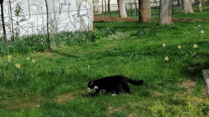 pisica cumparaturi berceni