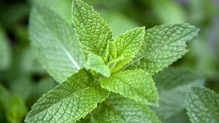 Singura planta care iti taie pofta de mancare. Ar trebui inclusa in orice dieta