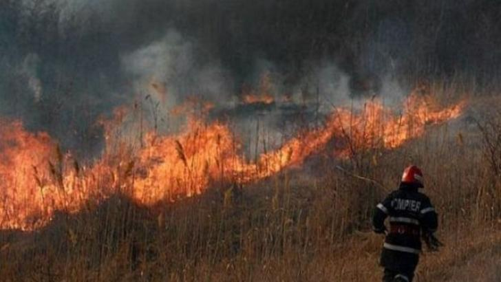 neamt incendii padure