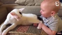 Au amuțit de spaimă când copilul a tras pisica de picioare. Ce a urmat i-a șocat!