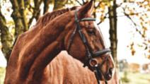 Cal furat, returnat proprietarului pentru că avea obiceiul să muște