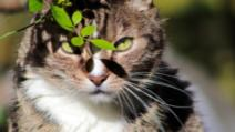 STUDIU: Pisicile pot contracta coronavirusul. Ce animale de companie sunt vulnerabile