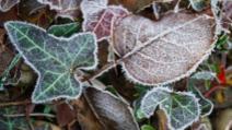 Informare meteo de vreme deosebit de rece: brumă și îngheț la sol