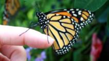 """Criza naturii: """"Apocalipsa insectelor"""", mai complicată decât se credea"""