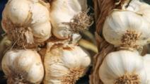 Nu mai consuma niciodată usturoi dacă ai una din aceste boli