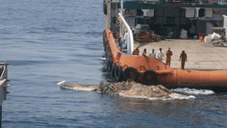 Terifiant! Marinarii au scos din adâncuri o creatură misterioasă. Au îngheţat de spaimă! Ce era