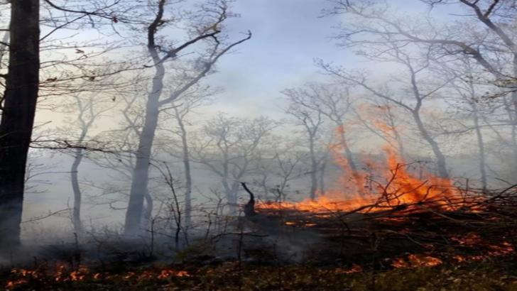 incendii padure salaj