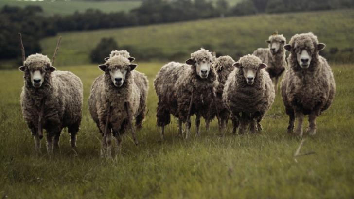 Amendă de 15.000 de lei pentru un bătrân din Prahova care a ieșit să-și adune oile