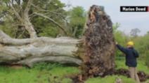 O vijelie puternică le-a smuls copacul din rădăcină! Când au văzut ce era îngropat acolo, au îngheţat!