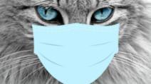 coronavirus animale de companie Foto Pixabay.com