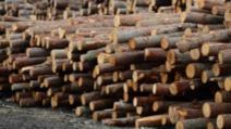 Harghita: 5.000 lei amendă pentru 3 mc de lemne