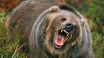 Mamă și fiică, ucise de urs. Rezultatul autopsiei, tulburător: de ce le-a atacat bestia