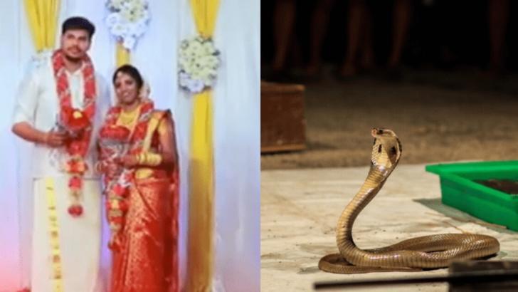 Gest șocant, în India: și-a ucis soția, după ce a aruncat cu un șarpe cobra în ea
