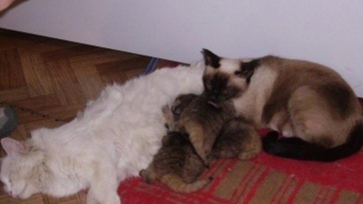 A găsit 4 puiuţi într-o tufă. I-a luat acasă. Când au crescut, a urmat șocul! Ce erau, de fapt, creaturile