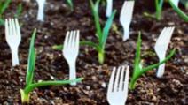 A înfipt furculiţe de plastic în grădină! Motivul, genial