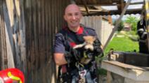 Motănașul Tom salvat dintr-un puț din Dumbrăvița va fi adoptat de pompierii brașoveni Foto: Facebook/IGSU