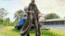 Piton uriaș, capturat în Florida: bărbatul s-a luptat cu reptila până a imobilizat-o