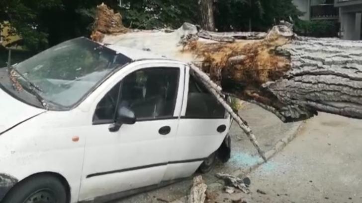 Copac căzut peste trei mașini în Pitești