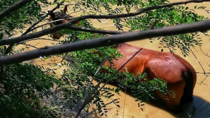 Cal salvat din râul Argeș de pompieri din cadrul ISU Giurgiu