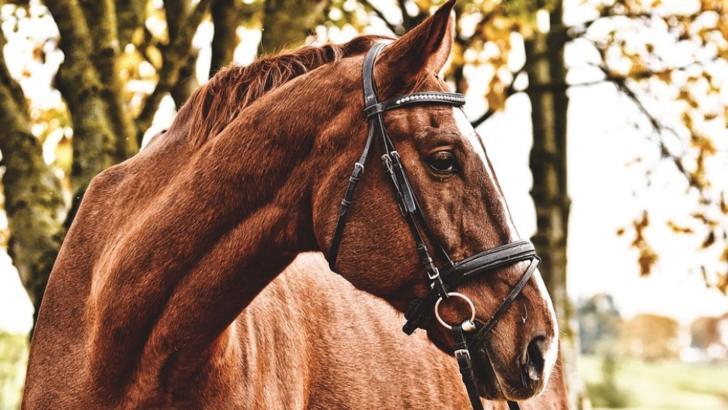Tragedie, în Argeș: fetiță de 10 ani, omorâtă de un cal