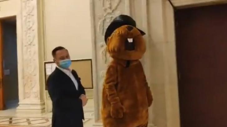 Circ în Casa Poporului. O organizație neguvernamentală a îmbrăcat un om în castor și a intrat în Parlamentul României