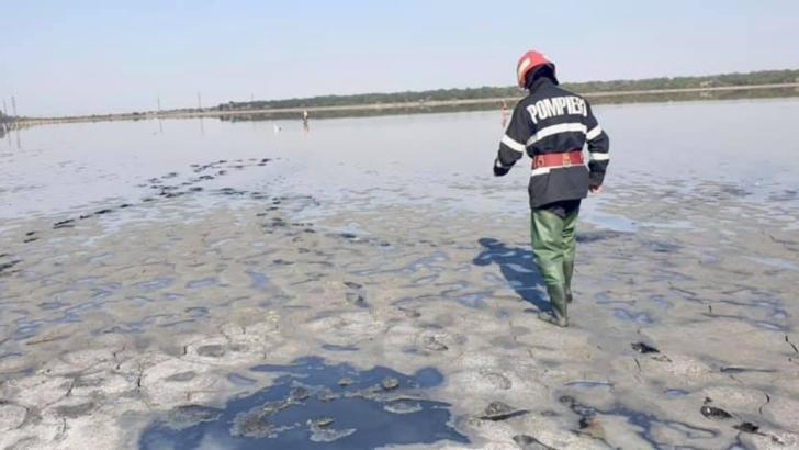 Pompierii brăileni au salvat de la moarte o lebădă împotmolită la Lacu Sărat