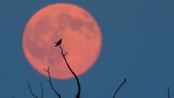 Luna-Căpșună din 5 iunie dă peste cap viețile zodiilor. Nimic nu va mai fi la fel