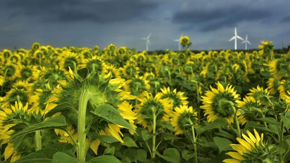 Cod galben de vreme severă. Noi avertizări de la meteo: caniculă, ploi și furtuni
