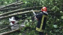 Copaci doborâți de vânt la Tulcea (sursă ISU Tulcea)