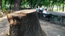 """Garde de Mediu, amendă uriaşă pentru Primăria Capitalei, pentru lipsa spaţiilor verzi. Bădulescu: """"Ministrul Mediului, mincinosul de serviciu"""""""