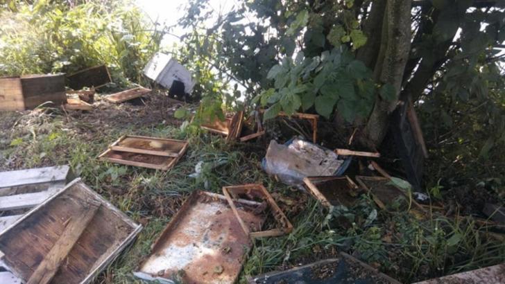 7 stupi de albine, distruși de urs, într-o localitate din jud. Covasna