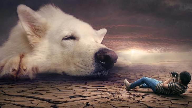 Anii câinești sunt un mit, spun cercetătorii americani Foto: Pixabay.com