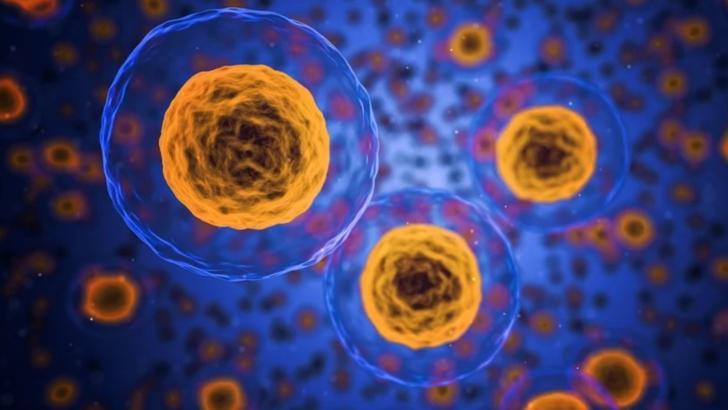 Alimentele care hrănesc celulele canceroase și provoacă inflamații în organism