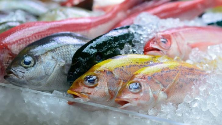 Imaginile care au isterizat internetul: un peşte îngheţat, readus la viaţă